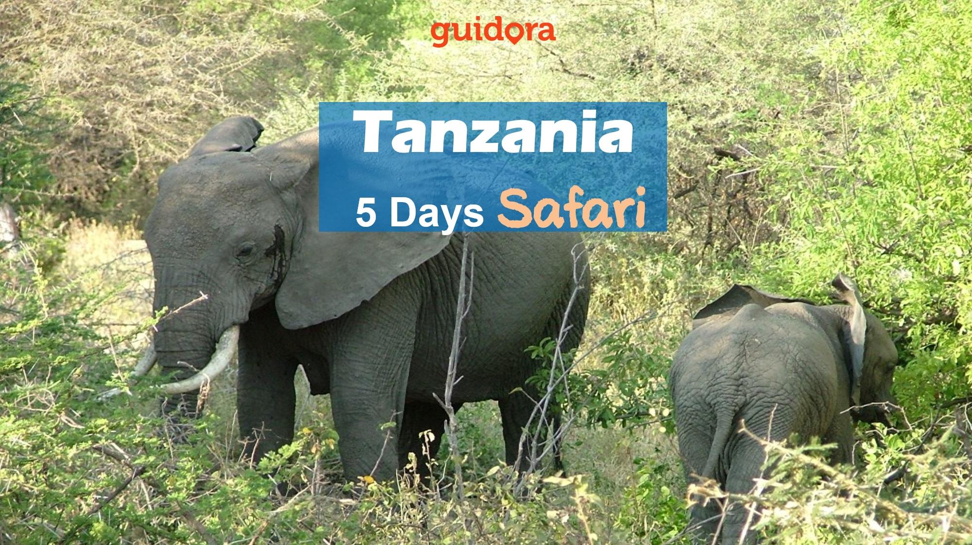 Safari Booking in Tanzania