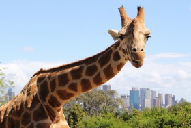 What to do in Sydney in 3 days