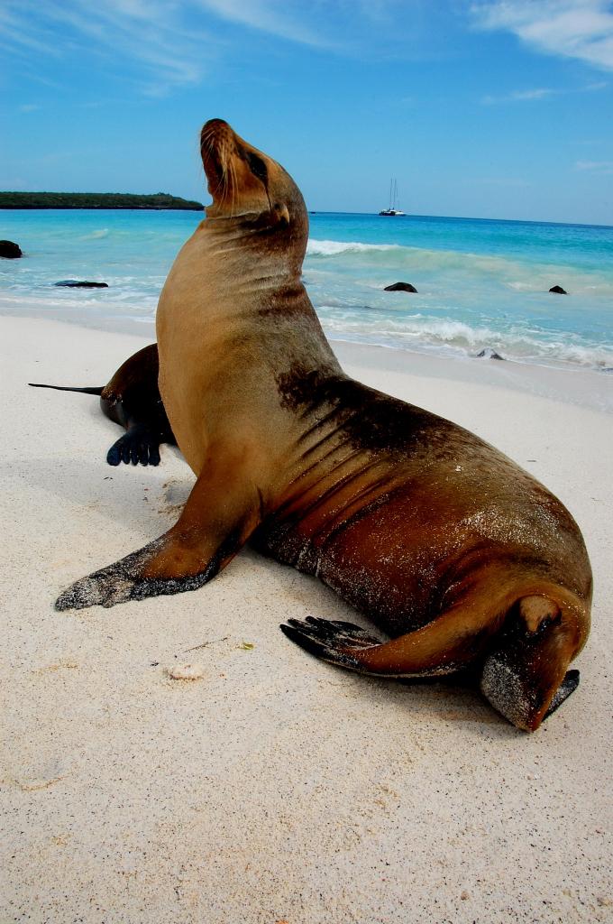 Galapagos Island Wild Life