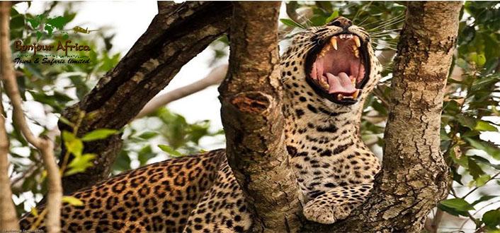 3 Days safari Tarangire, Ngorongoro Creator & Lake Manyara