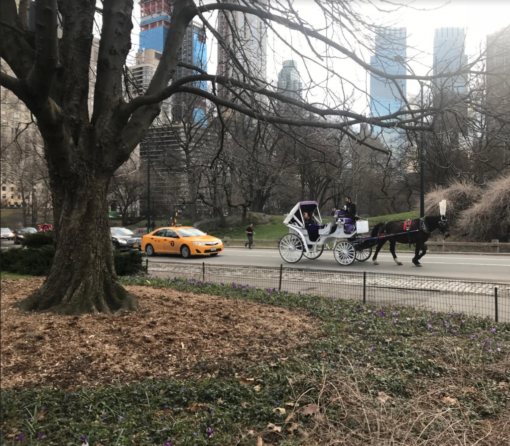 New York Tips - You can pay some USD and use one of the horses to walk you though Central Park