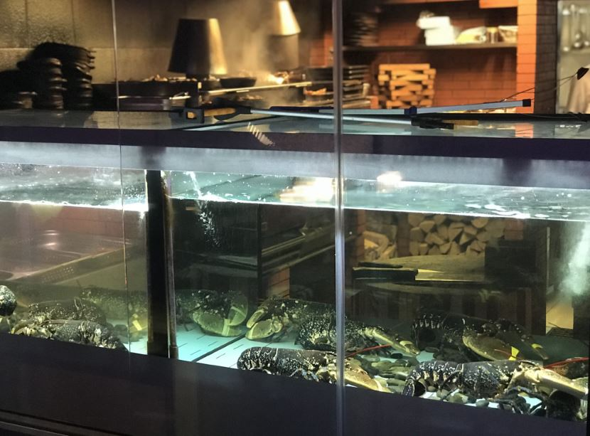 Sciacca Grill in Malta - The fresh lobsters