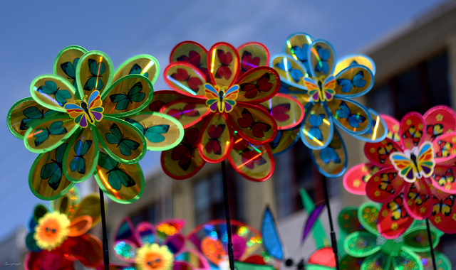 The best Festivals in San Francisco