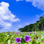 Where to stay in Okinawa – 10 Best hotels in Okinawa for all budgets